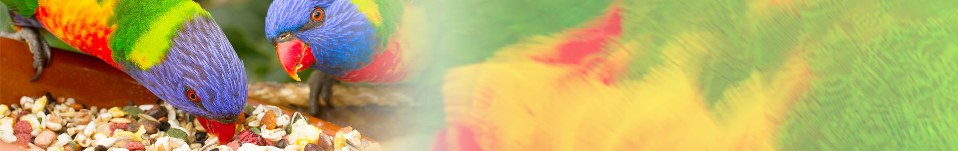 BANNER2-parots-food
