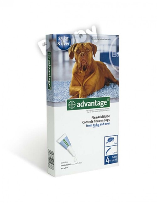 advantage_25 copy