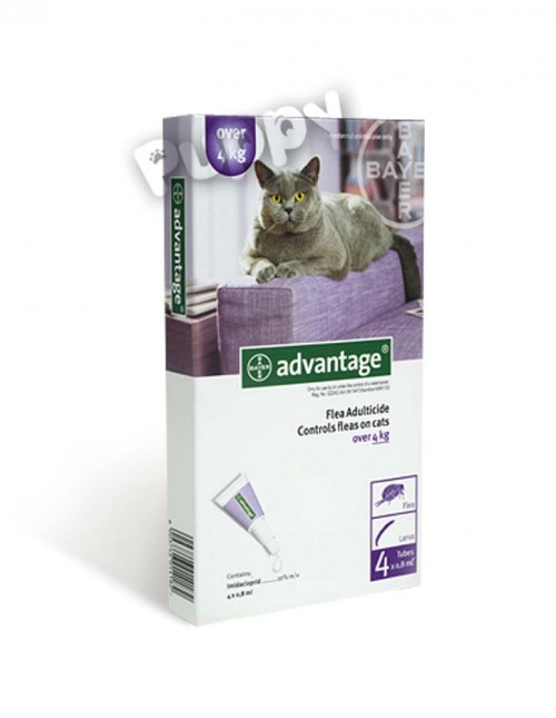 advantage_cat4+ copy